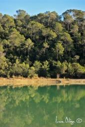 Le lac de Cécélés, 2013- 3