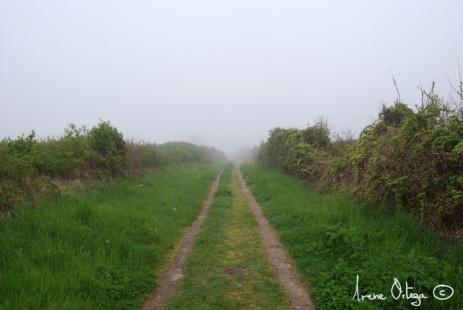 Sud de la Bretagne, 2009- 5
