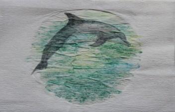 Dauphin commun, Marsouin à ventre blanc. Delphinus delphis. 10 x 15 cm. 2016