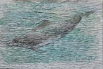 Dauphin à bosse de l'Atlantique, Sousa de l'Atlantique, Sotalie du Cameroun, Dauphin de Teüsz. Sousa teuszii. 5 x 7,5 cm. 2016